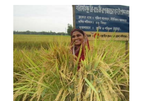 Agricultural development in North West Bangladesh
