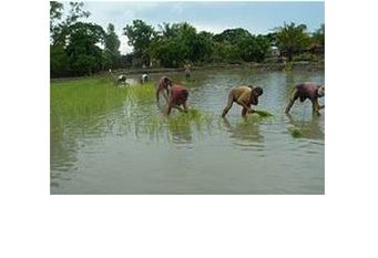 Agriculture and Adaptation in Bangladesh Current and Projected Impacts of Climate Change
