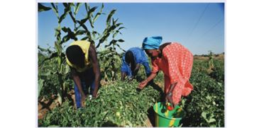 Strengthening Agricultural Extension and Advisory Systems