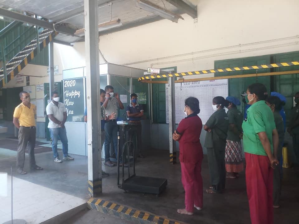 Tea factory traning