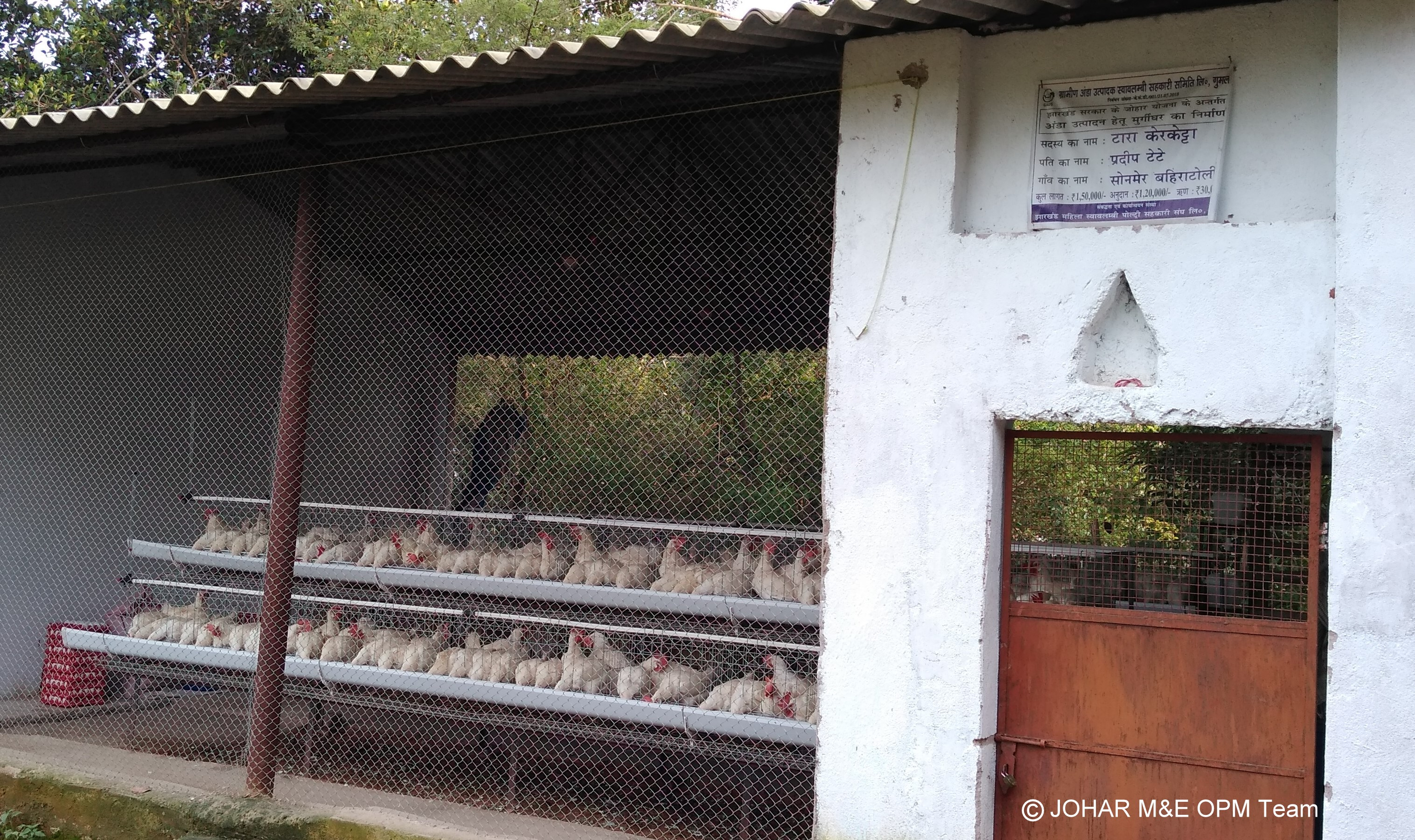 A layer farm supported by the JOHAR project – Copy