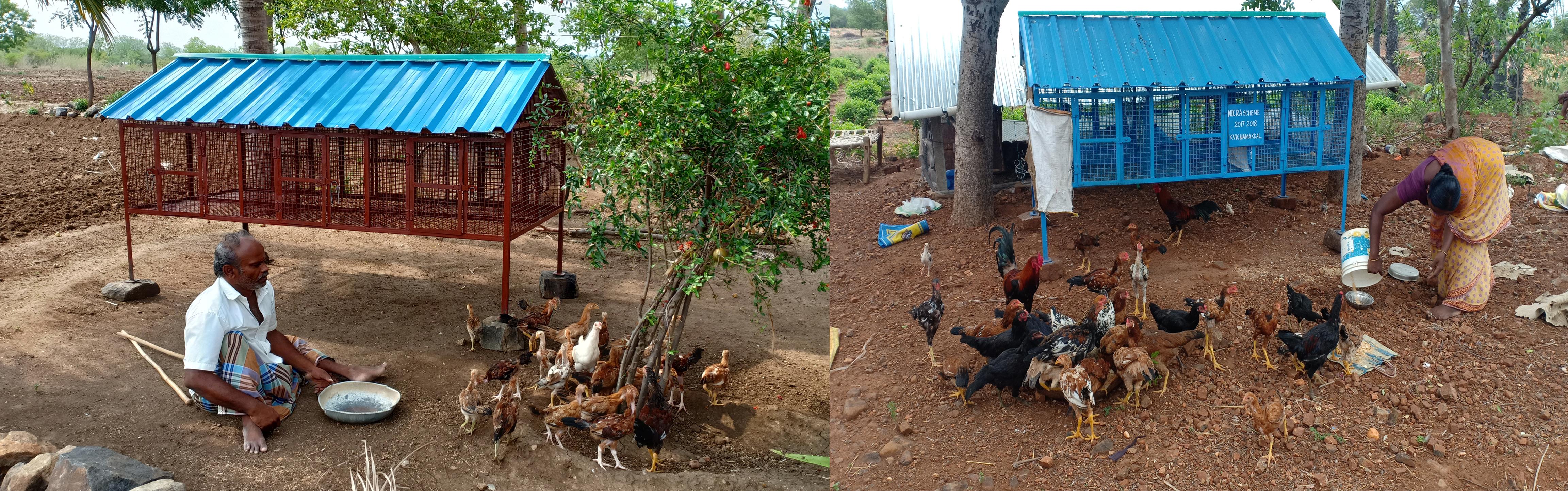 poultry shelter1