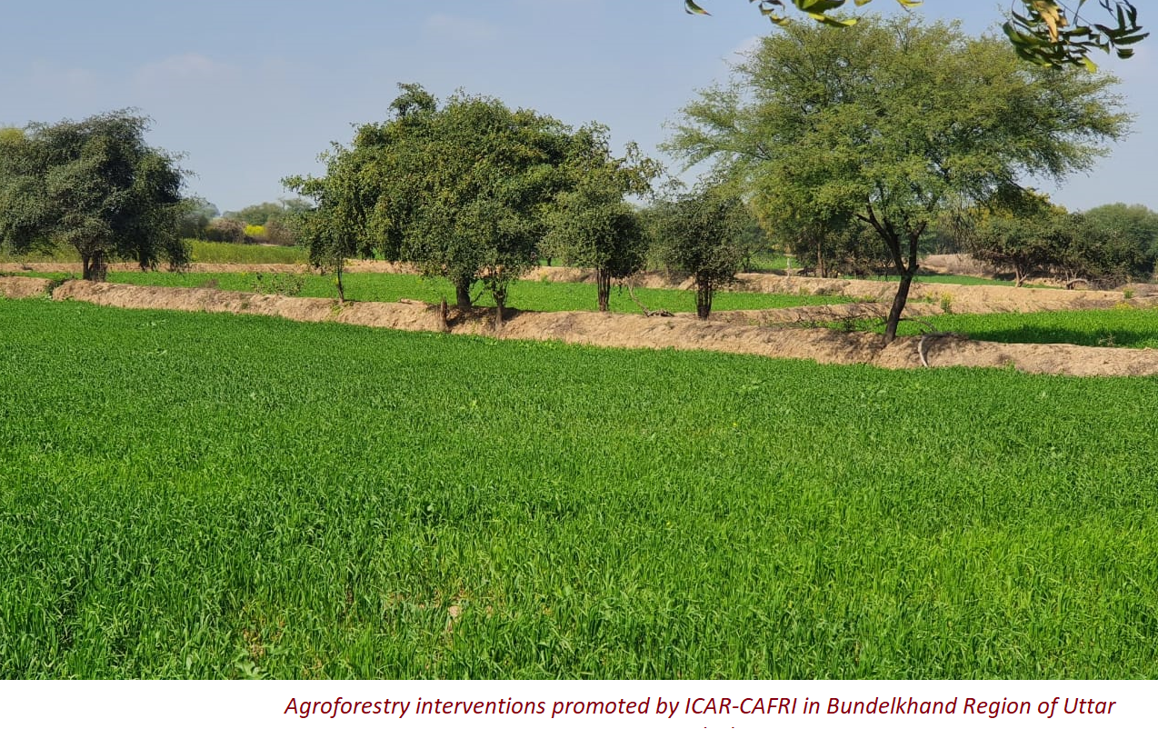 Agroforestry interventions