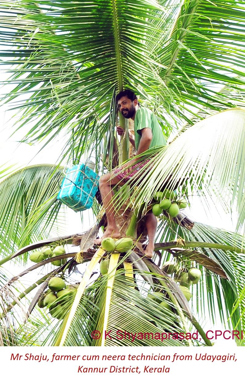 shaju farmer cum neera technician (1)
