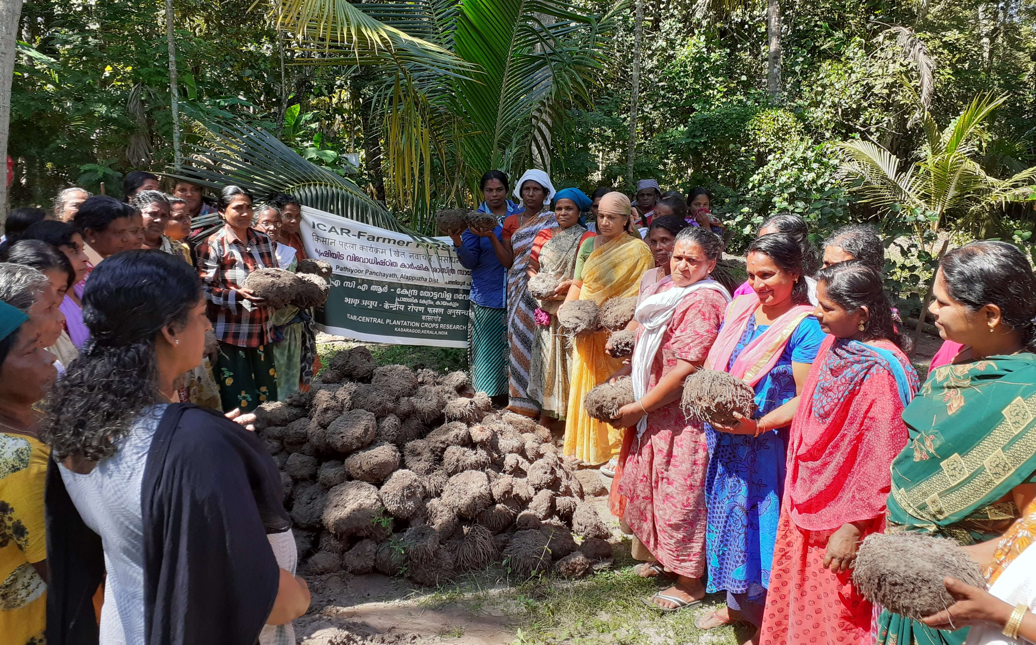 Gajendra variety of Amorphophallus- women farmers with their harvest