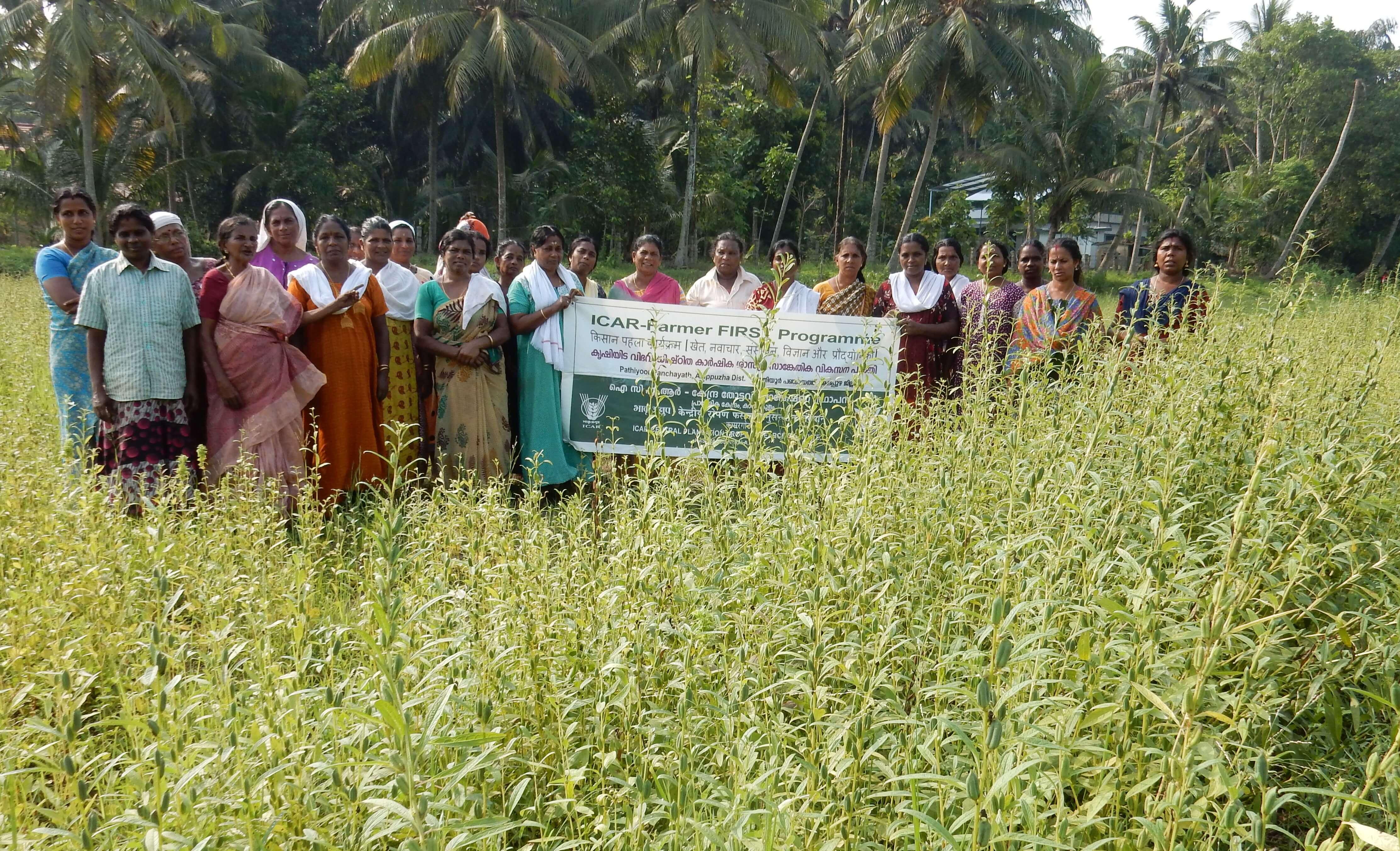 Revived the niche crop – Onattukara Sesamum by women MGNREGS groups through FFP convergence