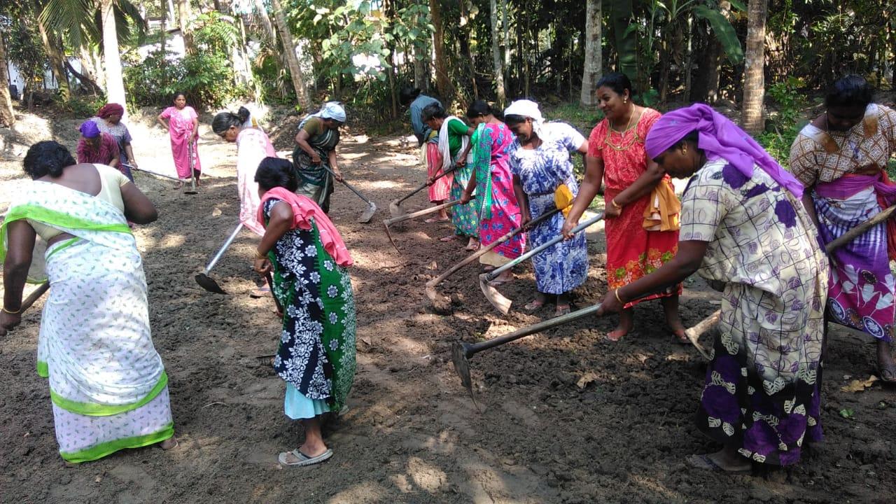 Women at work in MGNREGS at Pathyoor -FFP panchayath